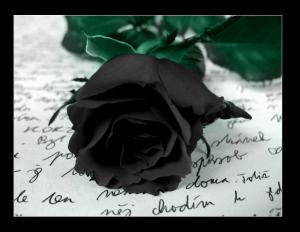 Black_rose